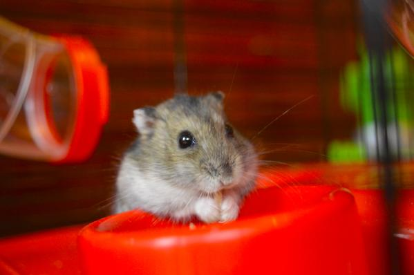 Hamster Internet of Things