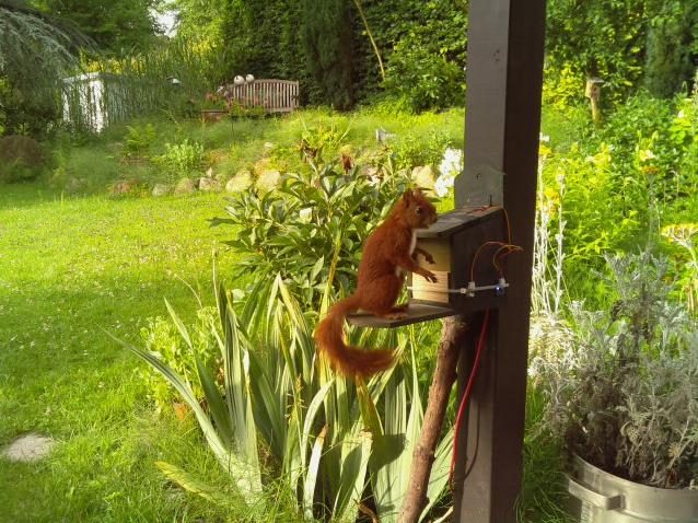 Squirrel Monitoring