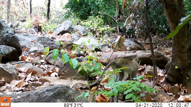 Deep Chimpact: Depth Estimation for Wildlife Conservation – MATLAB Benchmark Code